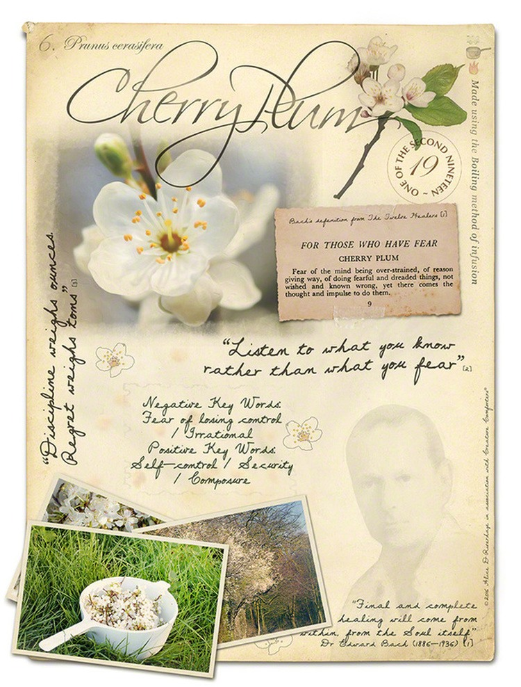 Cherry-Pulm