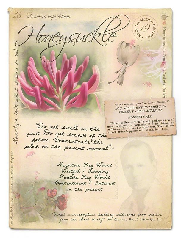 Жимолость - цветочная эссенция Баха