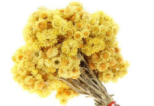 Бессмертник - цветы