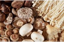 Все тайны гриба Шиитаке
