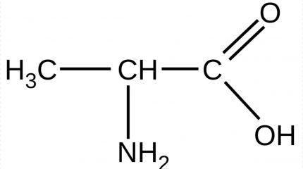 Аланин — заменимая, но очень важная аминокислота