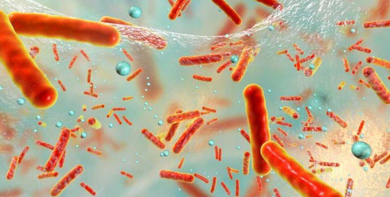 Болезнь Лайма и биопленка
