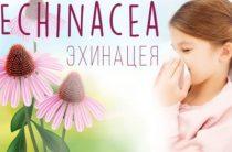 Лучшие средства с эхинацеей в интернет-магазине Айхерб: состав, цена, отзывы врачей и потребителей