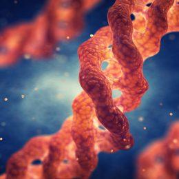 Влияние биодобавок с коллагеном на процесс пищеварения