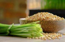 Что ценного в пшеничных проростках и как их используют